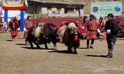 yak and horse
